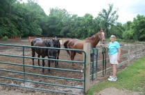 Saying hi to the horses at the barn